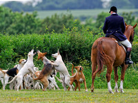 Hounds catching a biscuit with the Hampshire Hunt