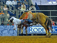 A Bareback rider gets bucked off at the Houston Rodeo