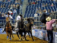 Photographers jump clear as the runaway bronco is restrained at the Houston Rodeo