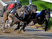Greyhound Racing at Towcester